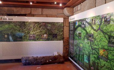 Porta de Campo do Gerês, Exposição Bosque