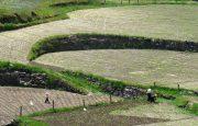 PR12 - Trilho dos Moinhos de Sta. Isabel do Monte, Agricultura