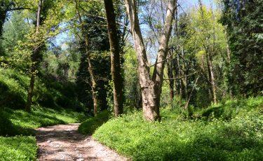 PR13 - Trilho da Caniçada, Percurso