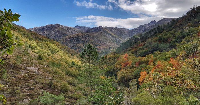 Mata de Albergaria, Serra do Gerês