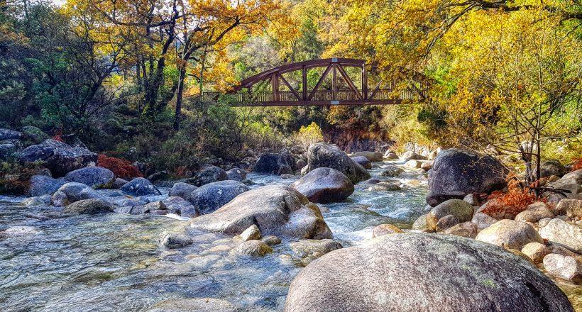 Ponte de S. Miguel, Mata de Albergaria