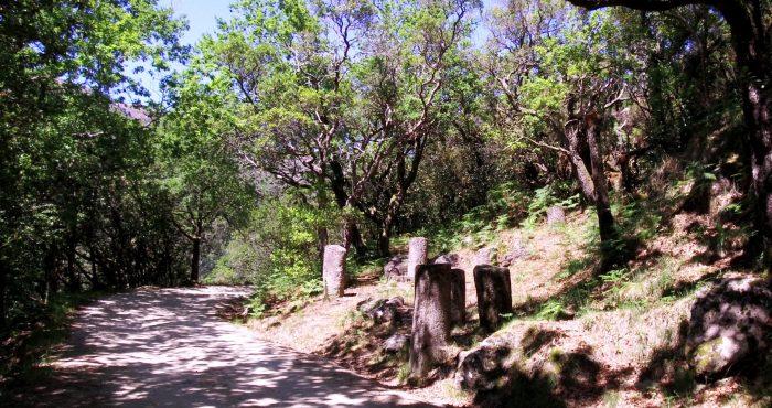 Geira, Via Romana, Mata da Albergaria
